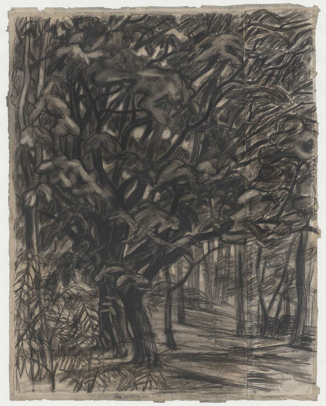 無題(樹木)の画像